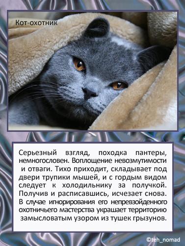 тесты какая я кошка с картинками