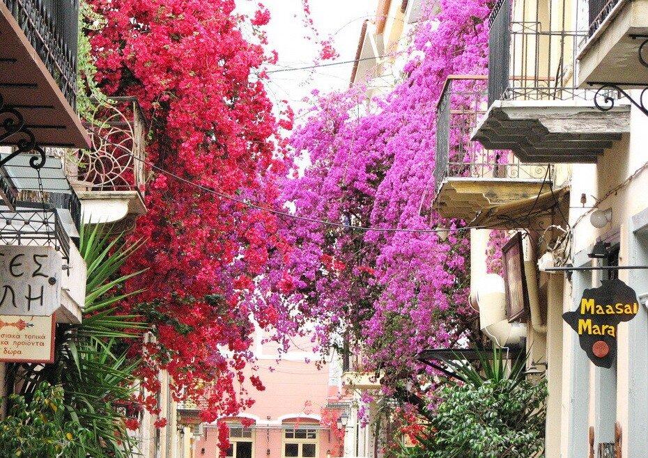 оздоровительном центре цветы греции фото и названия вылизанные гладкие волосы