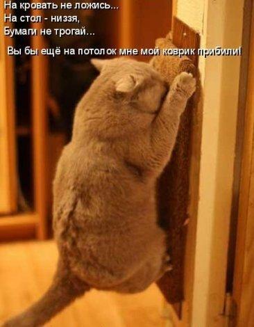 http://img-fotki.yandex.ru/get/5305/124059564.0/0_667db_1b7a44fd_L.jpg