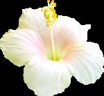 NLD PF Flower.png