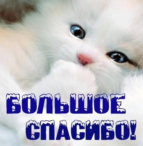 Большое спасибо! Белый котенок открытки фото рисунки картинки поздравления