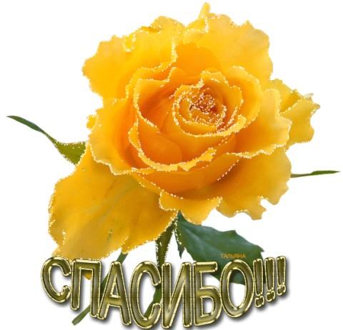 Спасибо! Прекрасная желтая роза открытки фото рисунки картинки поздравления