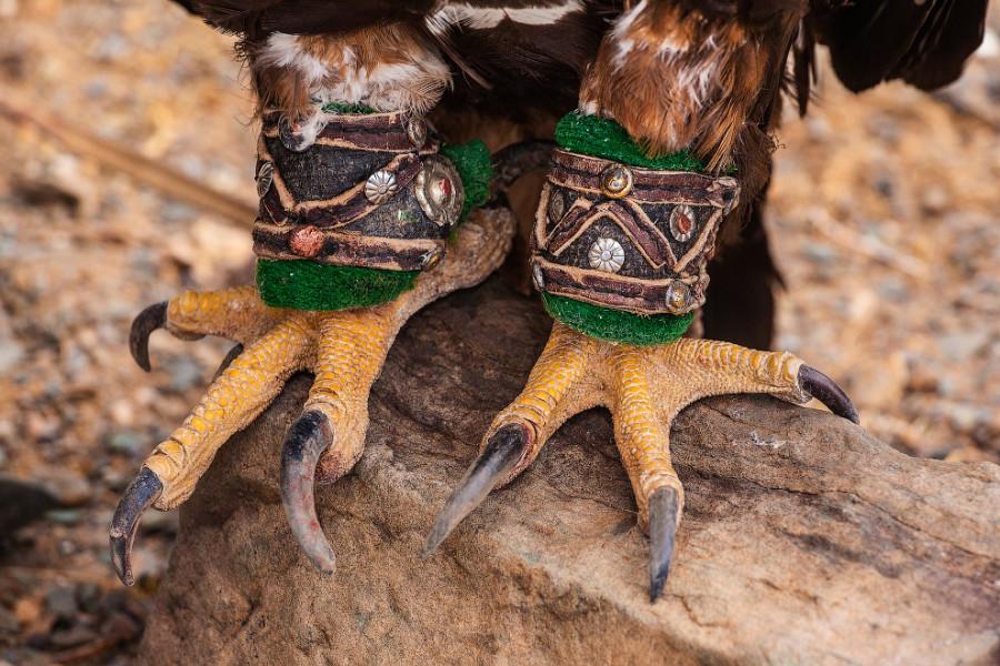 3. Отличительной особенностью охотничьего орла является вот такая необычная «обувка».