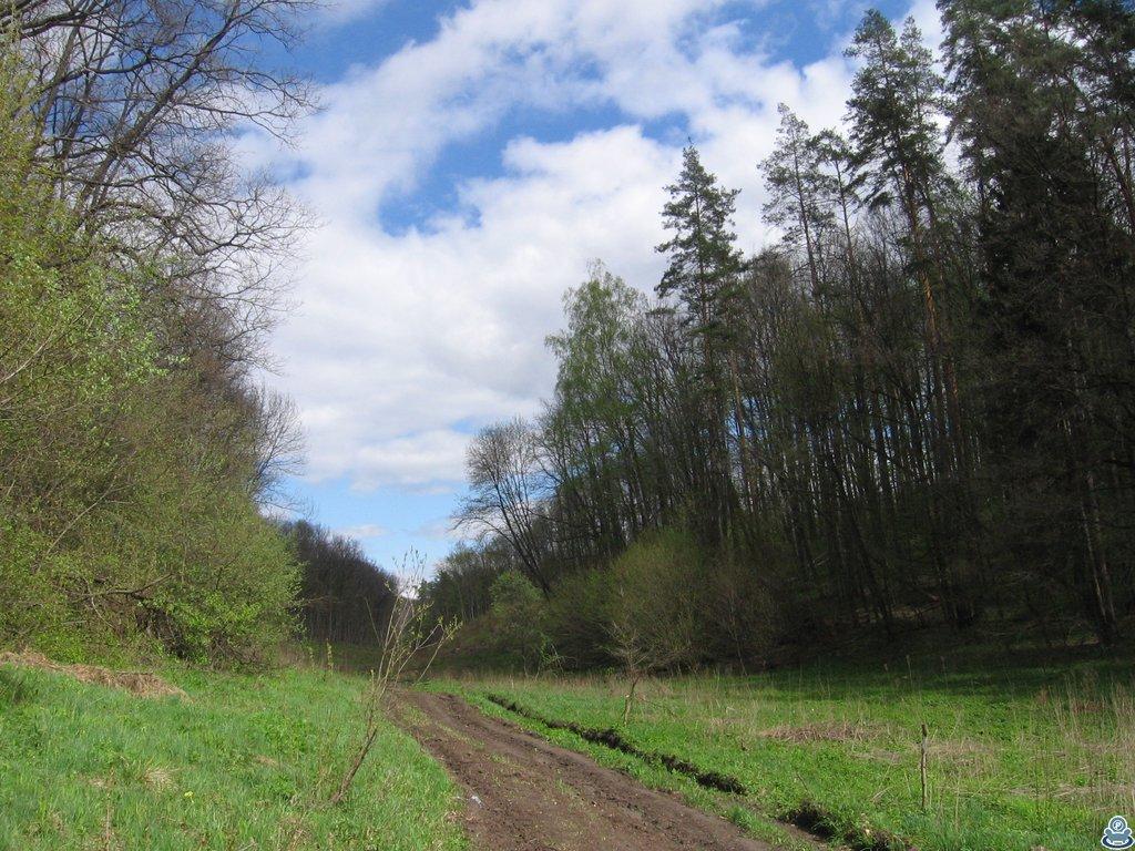 Дорога по оврагу