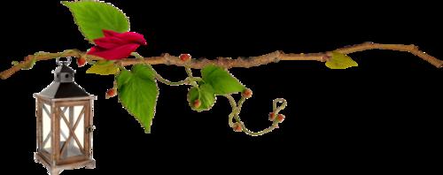 Роза и фонарь
