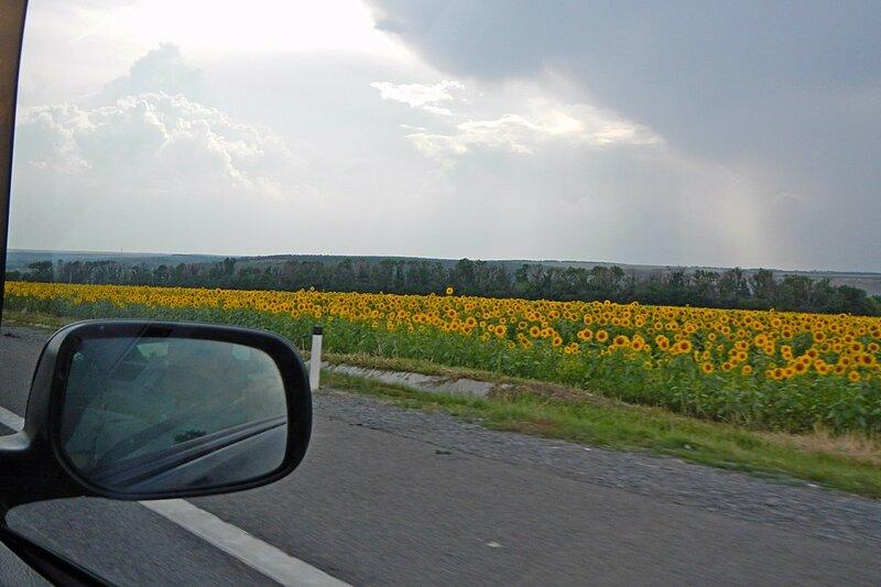 Вид на подсолнуховые поля из окна автомобиля - Путешествие из Кирова в Крым на автомобиле