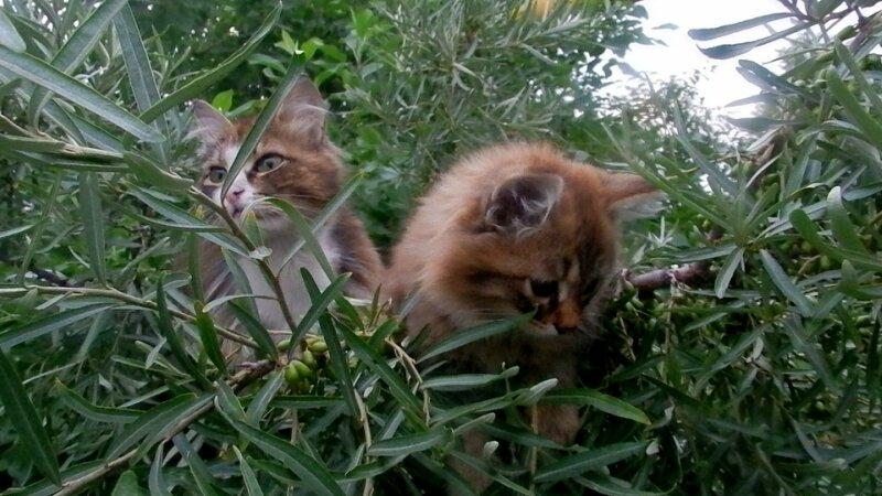 Облепиховые коты