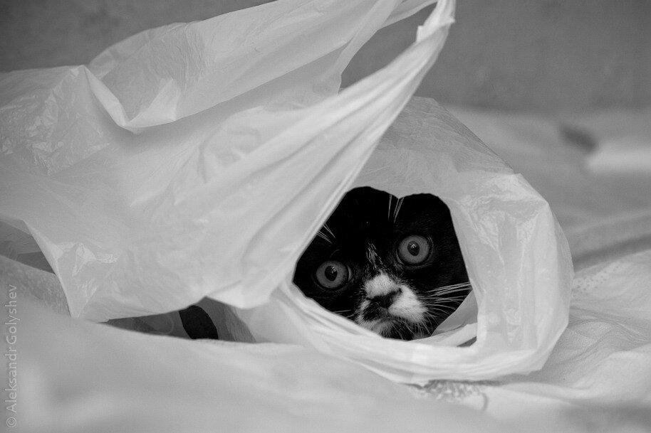 Котёно шаурмёнок