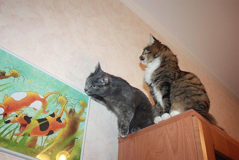 Дуся и Тинки охотятся на мушку, 1 июля