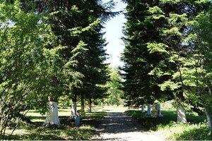 Лес, дорожка