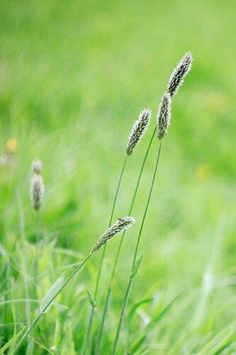 Травинка в поле бытия