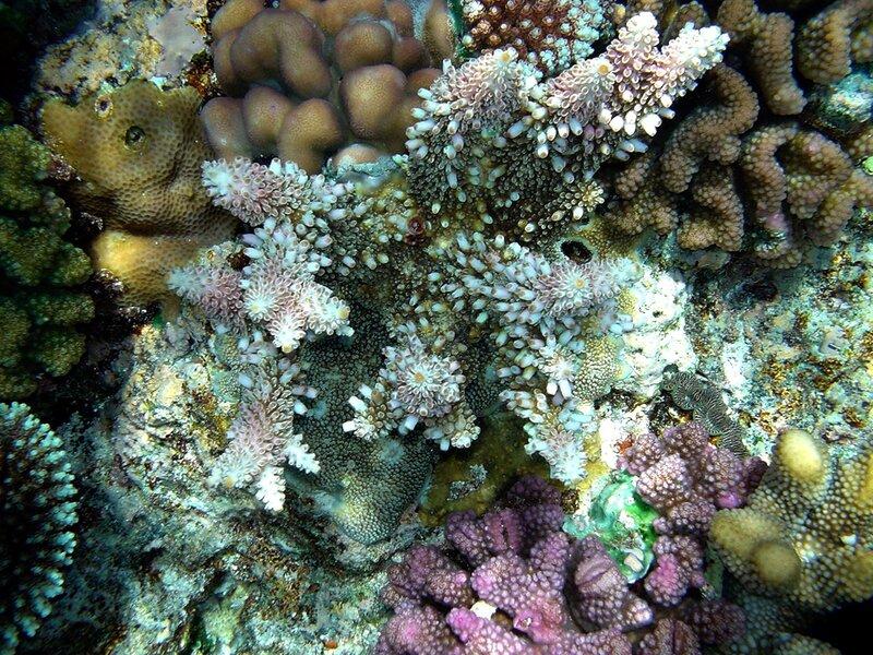 Подводный мир-Kораллы 17766