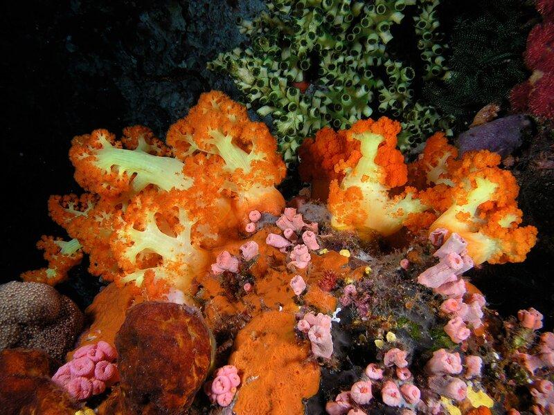 Подводный мир-Kораллы 56612