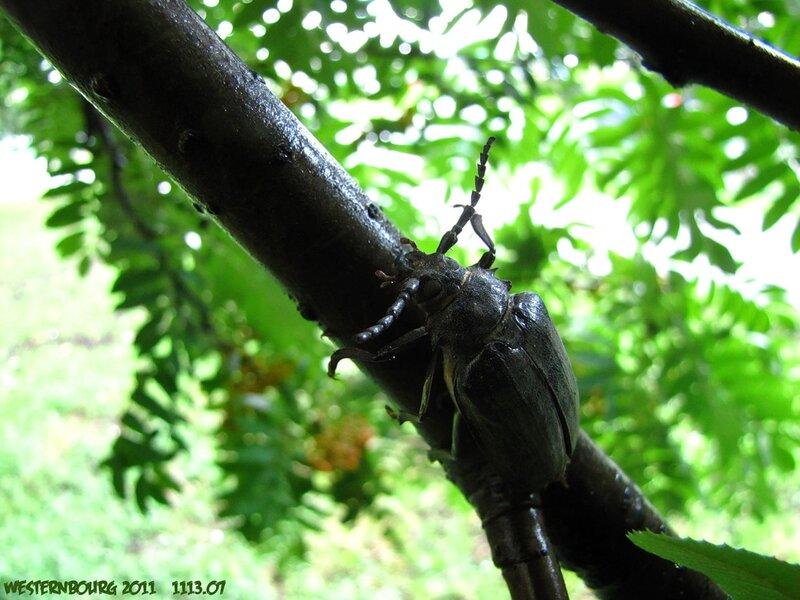 1113.07 Жизнь насекомых. 20 июля 2011 г.