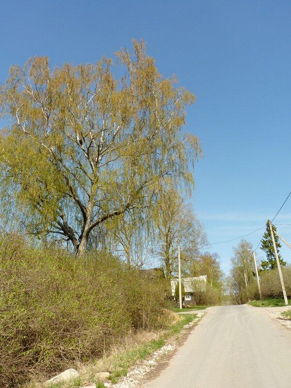 Изборские пейзажи (апрель 2014)