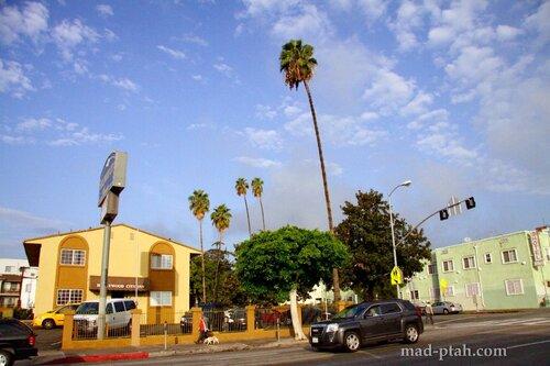 лос-анджелес, пальмы