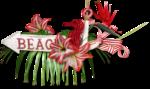 florju_tropicalsea_embellissement (5).png