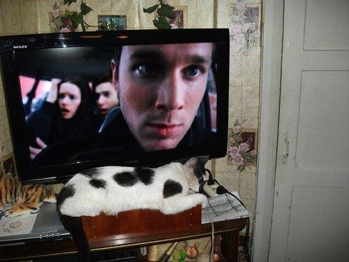 Чего смотришь, кота не видел?