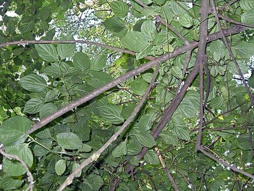 001. Велопутешествие по Кубани.2009. (146).jpg