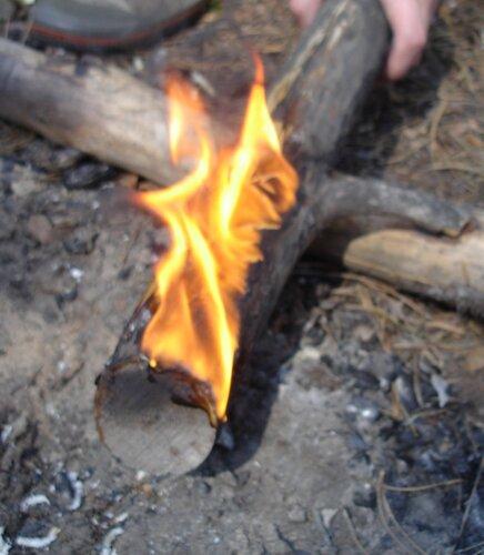 Таёжная свеча =))Факел из сосновой ветки.