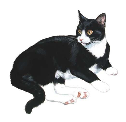 """Схема вышивки  """"Черный котик """" ."""