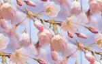 blooms7_1 (19).jpg