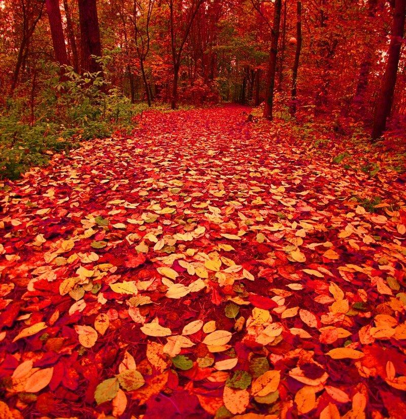 Осени-прелестницы приметы.