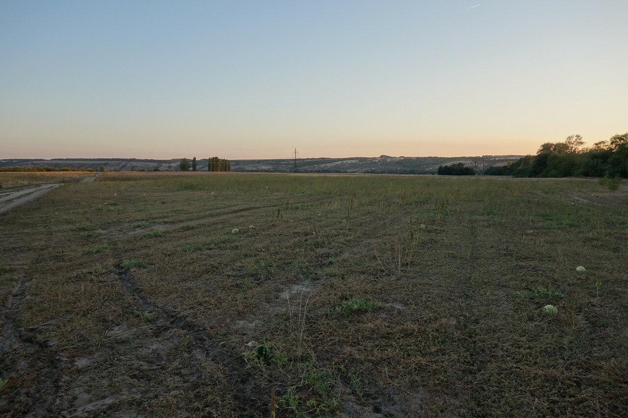 арбузное поле