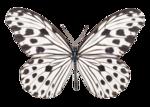 Butterflies different