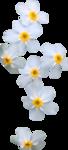 priss_spring_el78.png