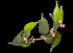 feli_ftl_foliage2sh.png