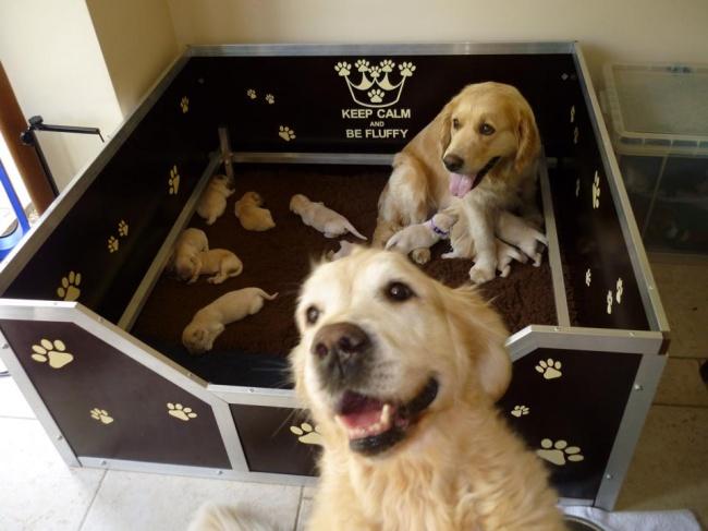 20собачек-мам, которые безмерно гордятся своими щенятами