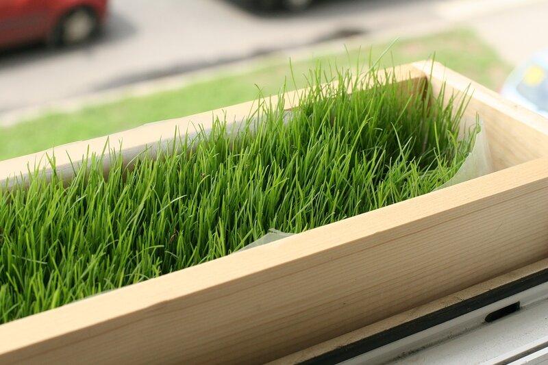 оби газонная трава: