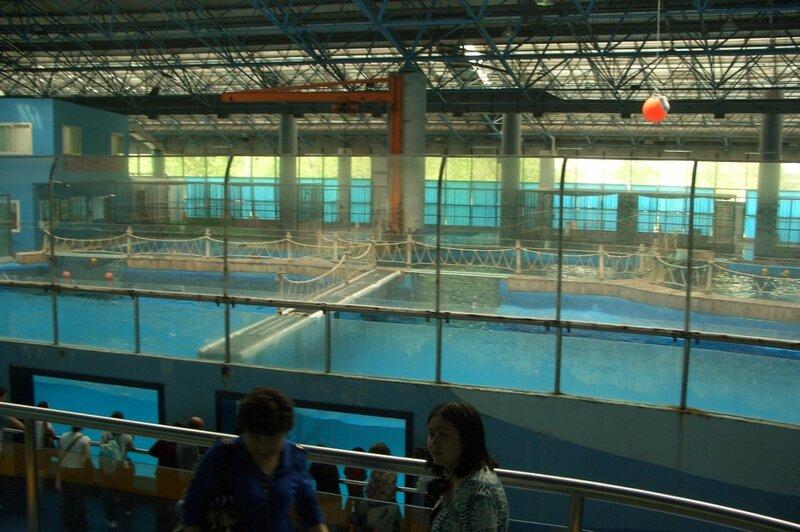 Пекинский зоопарк, дельфинарий, океанариум