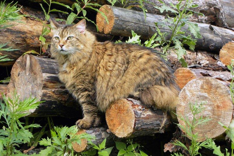 На траве дрова, на дровах котэ.