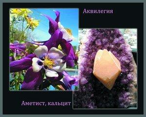 Во Владивостоке открывается выставка «Цветы и камни»