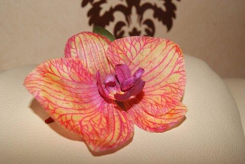 Орхидеи       0_6924d_6fb35421_L