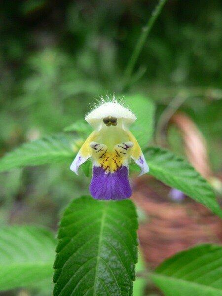 похож на орхидею