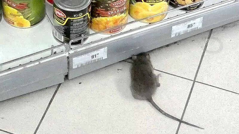 Крыса в супермаркете Семья на Солдатова 34.jpg