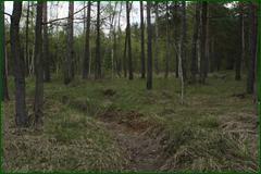 http://img-fotki.yandex.ru/get/53078/15842935.2eb/0_e3b43_5229e51d_orig.png