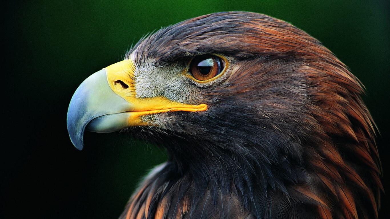 Красивий орел