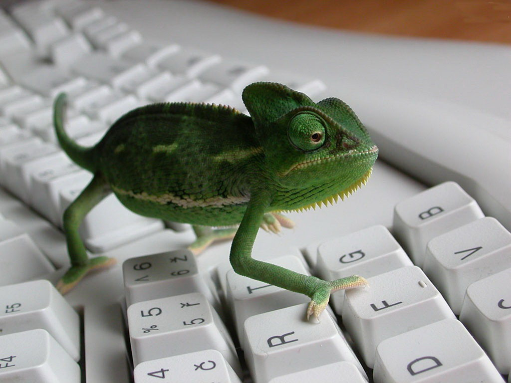 Хамелеон-програміст