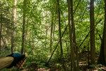 DSC00486. Заброшенная электрическая линия, вросшая в лес.