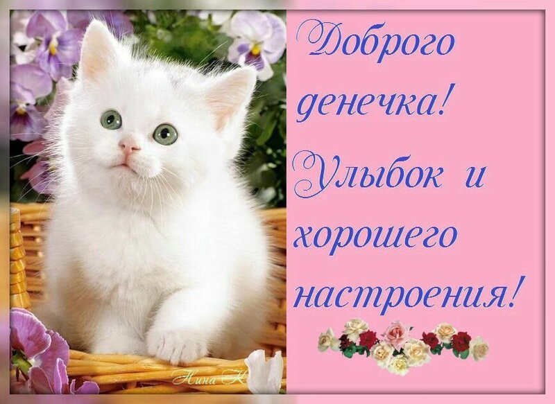 Открытки днем, открытки с добрым утром с котиками