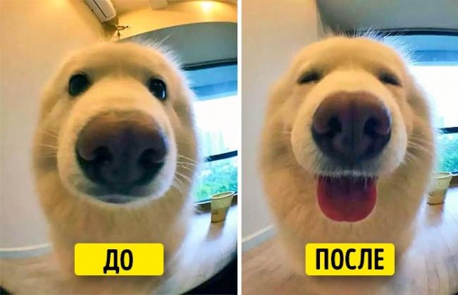 15фотографий отом, как важно хвалить своих питомцев (15 фото)