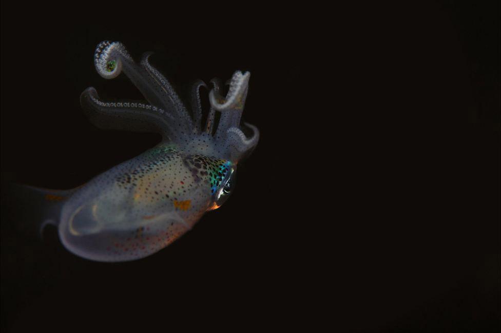 14. Вид оранжевых рыб из семейства помацентровых. Из-за их окраски рыб называют «клоунами». Оби