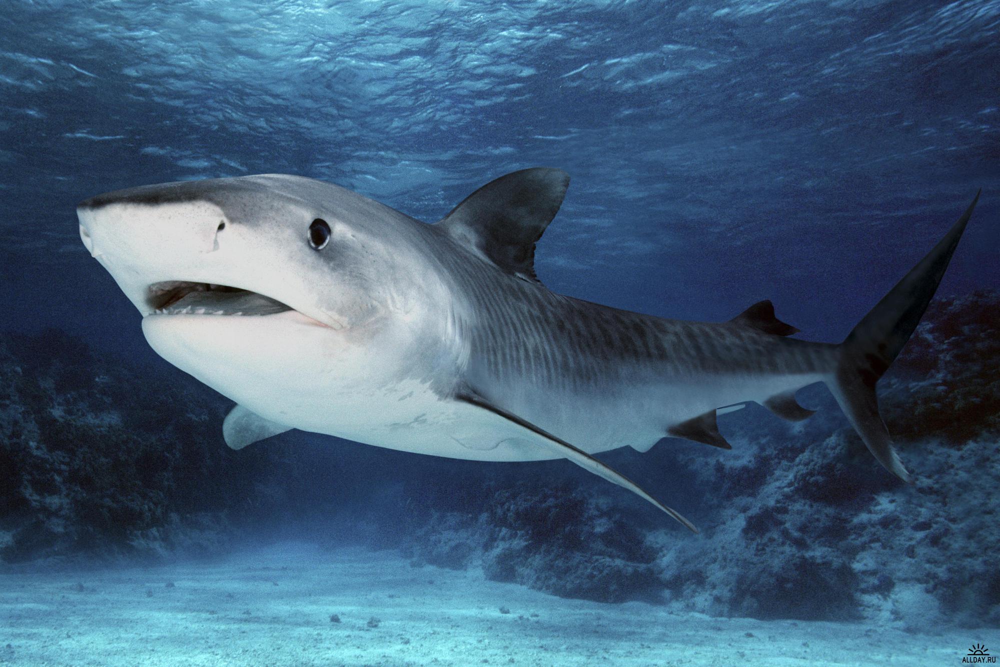 Ученые: Вырастить новые зубы людям помогут акулы