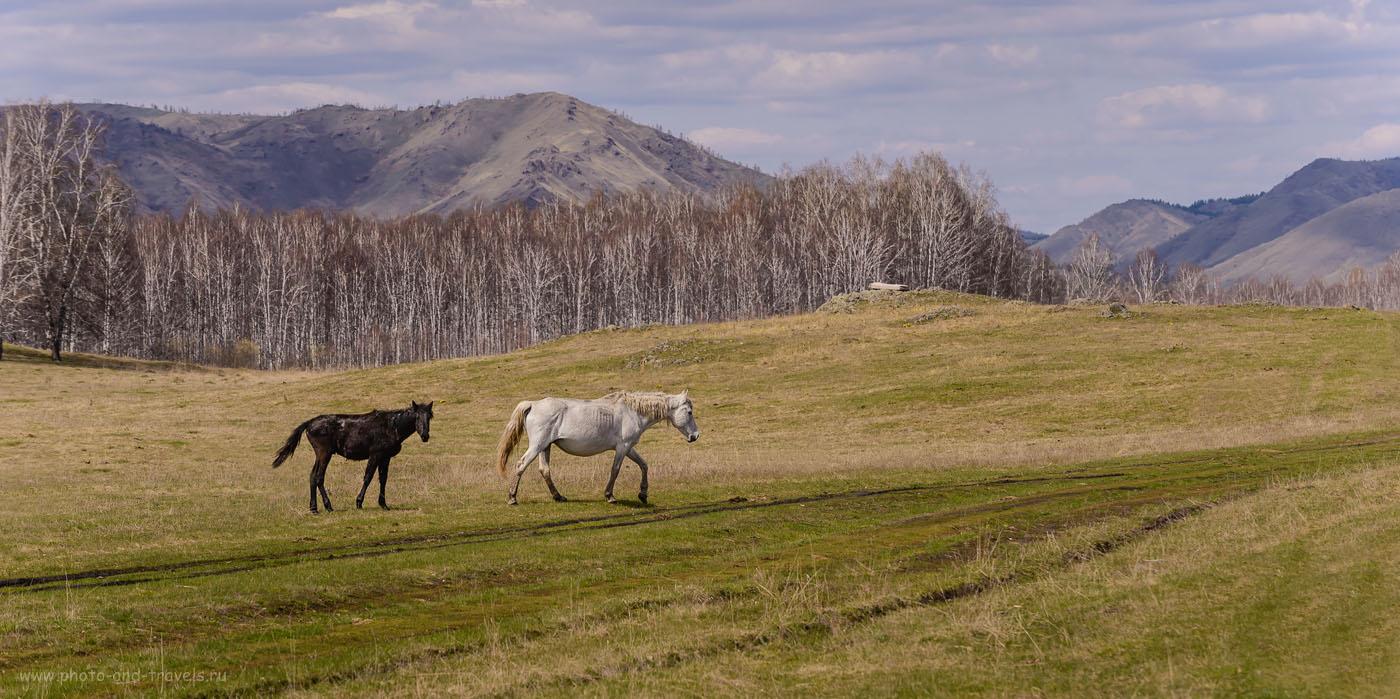 Фото 14. Лошади на лугу по пути к хребту Нурали. Отзывы туристов о поездке на отдых в Башкирию. 1/640, 5.6, 160, 145.
