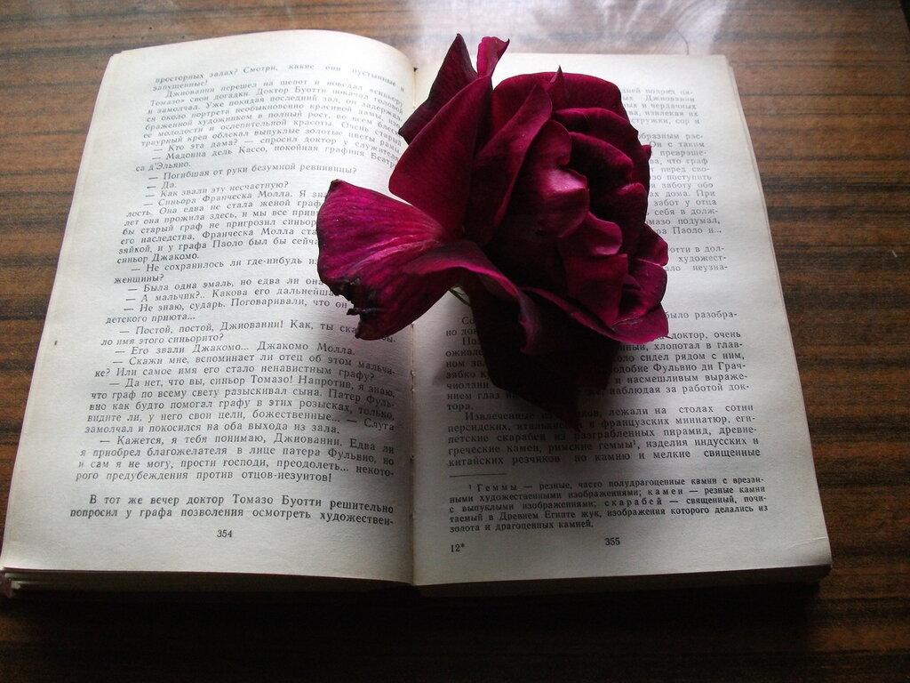Роза Жозефина