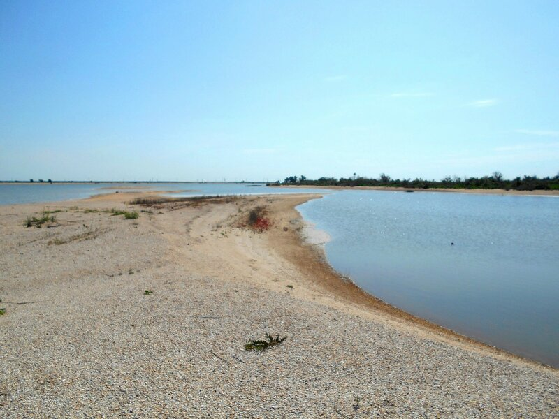 На берегах песчаных языков ... DSCN5677.JPG